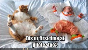 funny-pictures-cat-asks-if-it-is-your-first-time-at-pilates